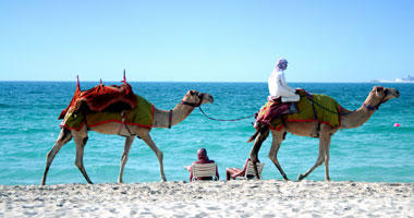 Camels on the Beach