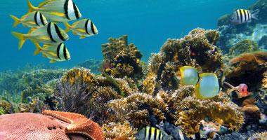 Dive Vanuatu